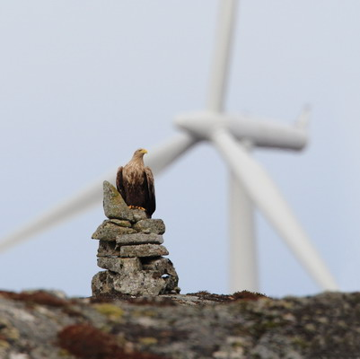 Wind energy and wildlife impacts, May 2-5 2011.